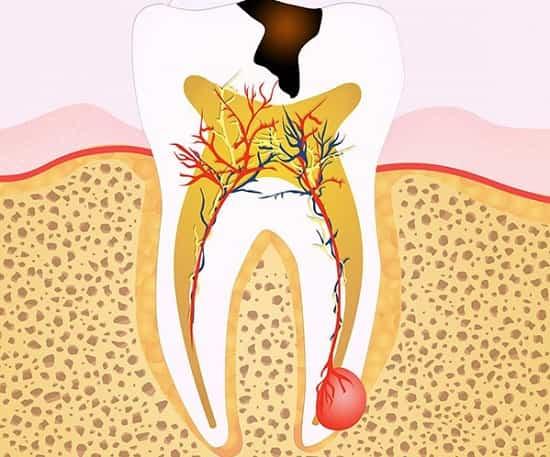 بافت عصبی پالپ دندان چه وظیفه ای دارد